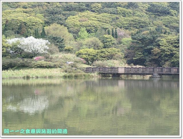 陽明山竹子湖海芋大屯自然公園櫻花杜鵑image013
