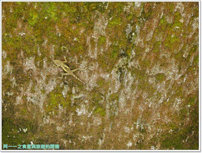 鸞山森林博物館.台東景點.祕境.會走路的樹.阿凡達image021