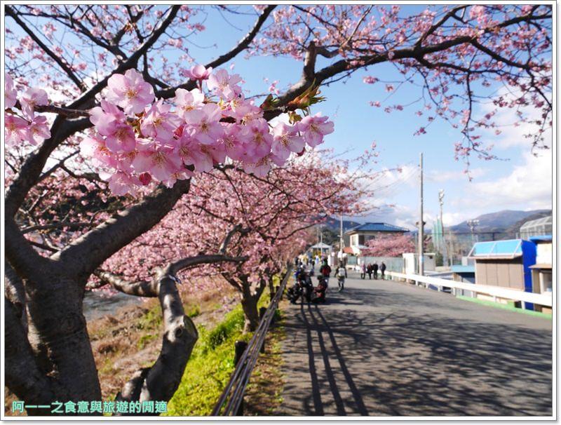 河津櫻.靜岡伊豆.日本自助旅遊.交通.攻略image033