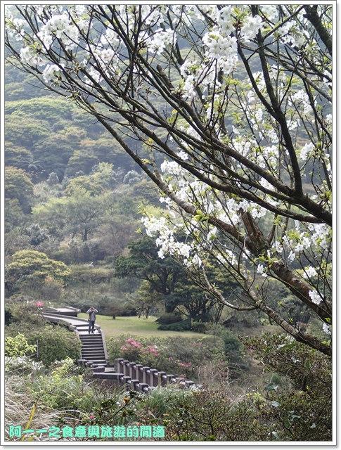 陽明山竹子湖海芋大屯自然公園櫻花杜鵑image037