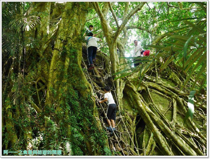 鸞山森林博物館.台東景點.祕境.會走路的樹.阿凡達image042